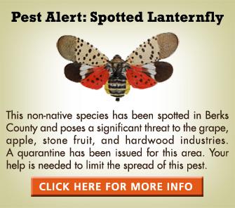 spottedlanternfly_2016